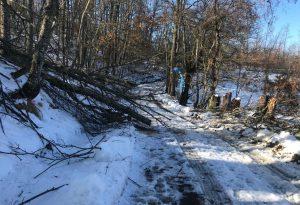 Gelicidio: Lugagnano, Morfasso e Unione Alta Valnure chiedono lo stato di calamità. A Ferriere nevica ancora, frana a Ciregna