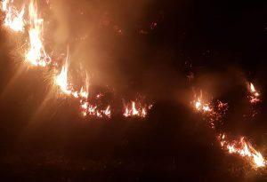 Vento e siccità, divampa un altro incendio boschivo. FOTO