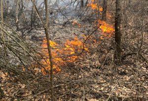 Incendio nel bosco a Favale di Morfasso. Il vento alimenta le fiamme
