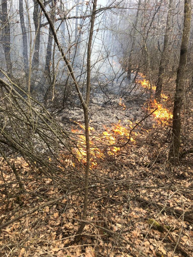 Incendio a Pradovera: quasi 900 metri quadrati di bosco distrutti