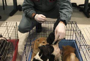 """""""Assenza di vaccini e trasporti precari"""": molti cuccioli si ammalavano e morivano"""