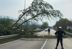 Albero minaccia la Statale 45, strada chiusa temporaneamente