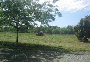 Erba tagliata al parco della Galleana: riapertura prevista per domani