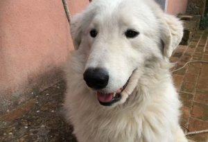 Cane vaga per le strade: maxi multa da 1.700 euro al proprietario