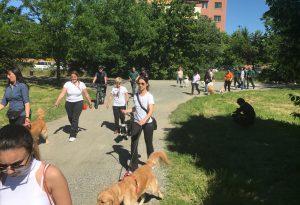 A spasso con il cane: regole e precauzioni per una buona convivenza