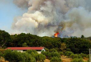 """Incendi boschivi: """"I Comuni mantengano alta l'attenzione"""""""