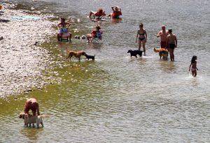 Ordinanza anti-cani in Trebbia, in comune arrivano minacce di coltellate ai vigili