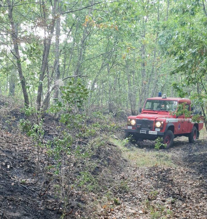 vigili del fuoco bosco